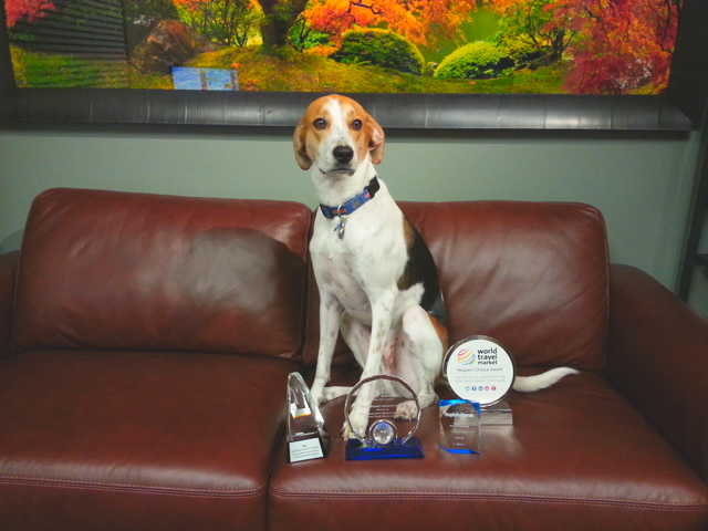 "Flip.to launches Operation ""Bark-away-from-the-trophies"""